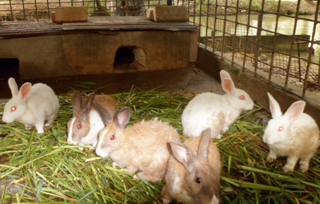 rabbit farming in nigeria