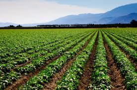History of Agriculture in Nigeria