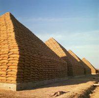 Groundnt Pyramid