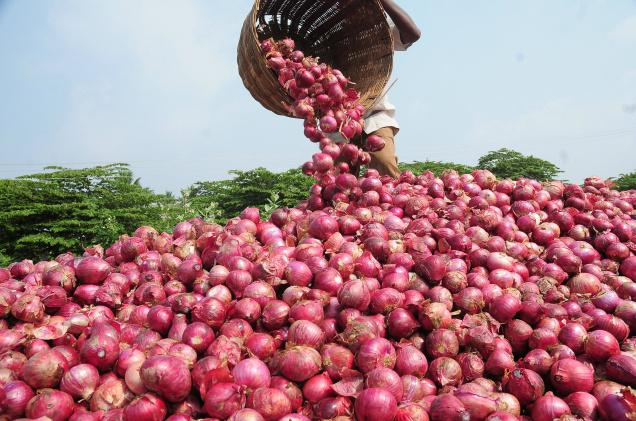 Onion Farming in Nigeria: All You Need to Know
