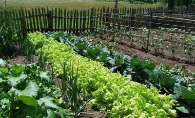 Organic Farming in Nigeria: Step by Step Guide