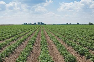 Arable Farming in Nigeria: All You Need to Know