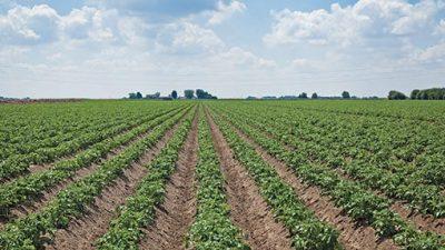 Dry Season Farming in Nigeria: Step by Step Guide