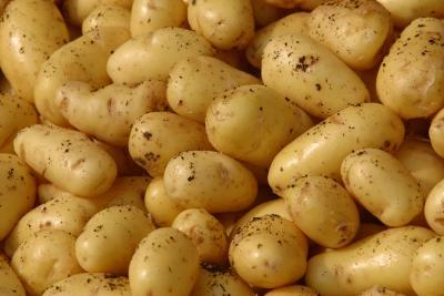 Irish Potato Farming in Nigeria: Step by Step Guide