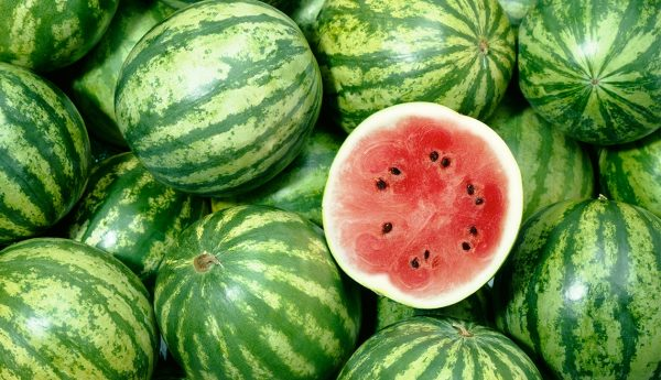 Watermelon Farming in Nigeria: Step by Step Guide