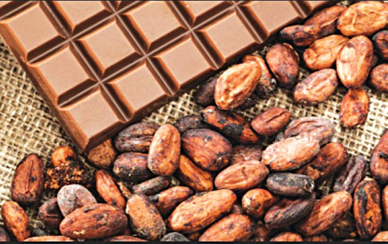 cocoa production in Nigeria