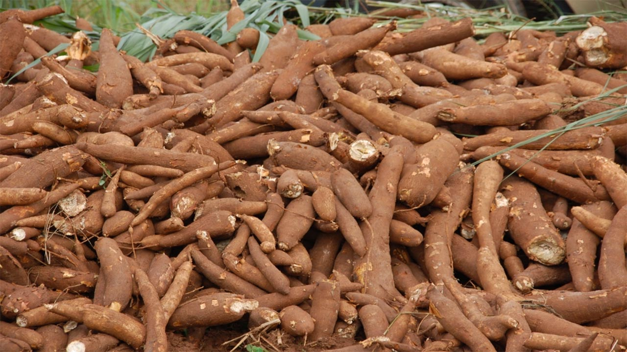 Cassava Production in Nigeria: How to Start in 2019