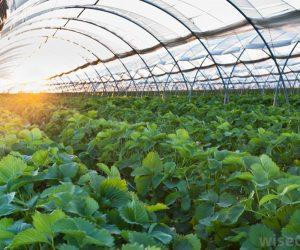 greenhouse farming in nigeria