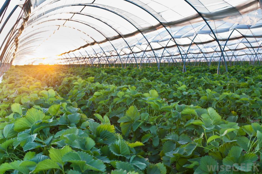 greenhouse farming in nigeria