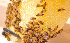 Honey Business in Nigeria