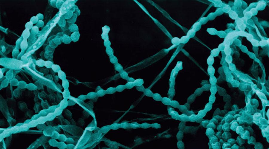 Careers in Microbiology in Nigeria