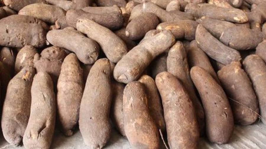 How to Preserve Yam in Nigeria