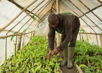 Problems of Agricultural Programmes in Nigeria