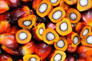 How to Export Palm Oil from Nigeria