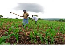 Best Universities to Study Agriculture in Nigeria