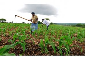 10 Best Universities to Study Agriculture in Nigeria